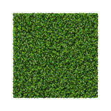 Square made from green leaves isolated on white background. 3D render. Royalty Free Stock Photos