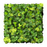 Square made from green leaves  on white background. Beautiful graphic made of green leaves on white background Royalty Free Stock Images