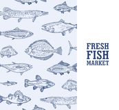 Square monochrome banner template with fish living in sea, ocean or river hand drawn with contour lines on blue vector illustration