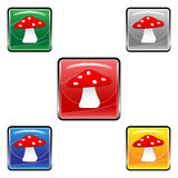 Square mushroom buttons Stock Photo