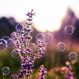 Square natural background with summer clear green meadow with pink flowers and soap bubbles brightly shimmer and fly in the air at stock image