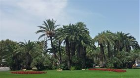 Square with palms. Nice square with green palms in Salou Royalty Free Stock Photos