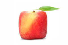 Square peach Stock Photography