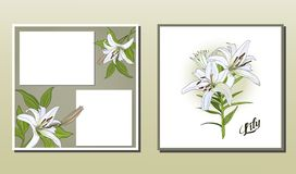 Square postcard and poster with white lily flowers vector illustration