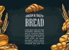 Square poster with bread. Vector color vintage engraving illustration Royalty Free Stock Photography