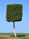 Square shape tree. On sky background Royalty Free Stock Photo