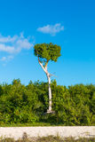 Square shape tree Royalty Free Stock Images