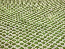 Square shaped grass on park Stock Images