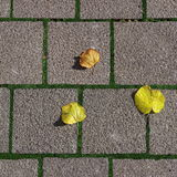 Square sidewalk with leaves (RAW format) Royalty Free Stock Image