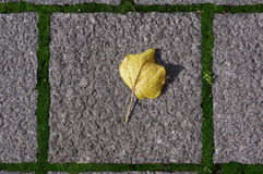 Square sidewalk with yellow leave (RAW format) Stock Image