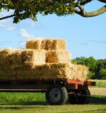 Square straw bales stacked on on country farm wagon