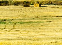 Square straw bales in stubbly field in the region of Andalusia,. Harvest time in the agriculture industry, specific seasons Royalty Free Stock Images