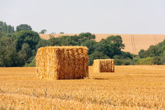Square straw bales Stock Image