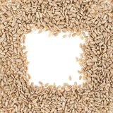 Square sunflower seeds frame Royalty Free Stock Image