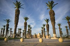 Square with tall palm in Tunisia, Sousse Royalty Free Stock Photos