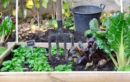 Square for vegetable garden Stock Image