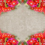 Square vintage frame with red flowers Stock Photos