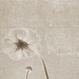 Square vintage texture with flower flip side royalty free stock image