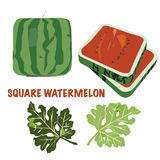 Square watermelon - illustration/Vector Stock Image