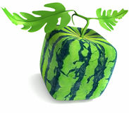 Square watermelon Stock Images