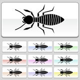 Square web buttons - Termite. Set of 10 web buttons - termite Royalty Free Stock Photos