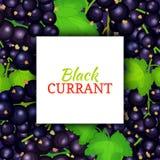 Square white frame, label on black berry background. Vector card illustration. Black currant fruit and leaves for packaging design food juice, jam, ice cream stock illustration