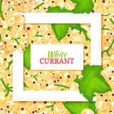 Square white frame and rectangle label on berry background. Vector card illustration. White currant fruit and leaves for Royalty Free Stock Photography