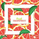 Square white frame and rectangle label on citrus red grapefruit background. Vector card illustration. Tropical fresh Royalty Free Stock Images