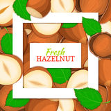 Square white frame and rectangle label on nutty hazelnut background. Vector card illustration. Cartoon filbert. Walnut nut fruits laeves for design of food Stock Photo