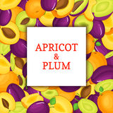 The Square white frame on ripe apricot plum fruit background. Vector card illustration. Delicious juicy plums apricots Royalty Free Stock Image