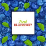 Square white label on ripe blueberry berry and leaves background.. Square white label on ripe blueberry berry and leaves background. Vector card illustration Royalty Free Stock Image