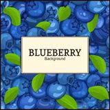 Square white label on ripe blueberry berry and leaves background. Vector card illustration. Blue bilberry beries fresh Royalty Free Stock Photography