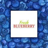 Square white label on ripe blueberry berry and leaves background. Vector card illustration. Blue bilberry beries fresh Stock Photos