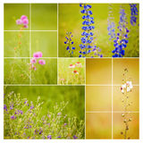 Square Wildflower collage Stock Images