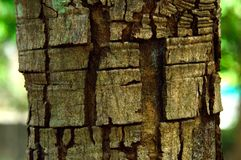 Forest wood bawl with square pattern background. A square wood bark on the big forest tree trunk in Thailand stock photography