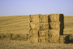 Squared hay balls stacked in a sunny day.  Stock Photos