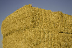 Squared hay balls stacked in a sunny day.  Stock Photography