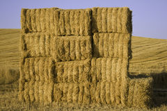 Squared hay balls stacked in a sunny day.  Royalty Free Stock Images