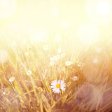 Squared vintage daisy background Stock Photo