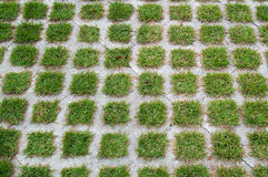 Squares of green grass in cement Royalty Free Stock Images