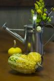 Squasesh giallo e verde fotografia stock libera da diritti