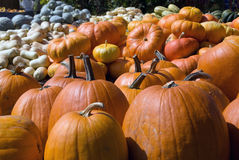Squash. Picture of several squashes at harvest time in autumn Stock Photo