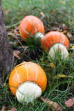 Squash. In grass yield autumn harvest crop gather royalty free stock images
