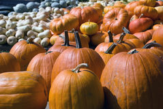 Squash. Picture of several squashes at harvest time in autumn Stock Photos