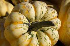 Squash Royalty Free Stock Photos