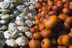 Squash. Picture of several squashes at harvest time in autumn Royalty Free Stock Photo
