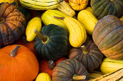Squash. A colorful assortment of winter squash stock images