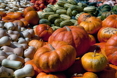 Squash. Picture of several squashes at harvest time in autumn Royalty Free Stock Image