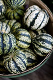 Squash. Fall classic, the bounty of harvest. Natural seasonal texture and color pallet Royalty Free Stock Photo