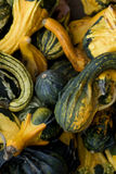Squash. Fall classic, the bounty of harvest. Natural seasonal texture and color pallet Stock Photography